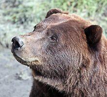 bear  by Martynb