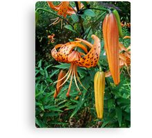 Turks Cap Lily Wildflower - Lilium superbum Canvas Print