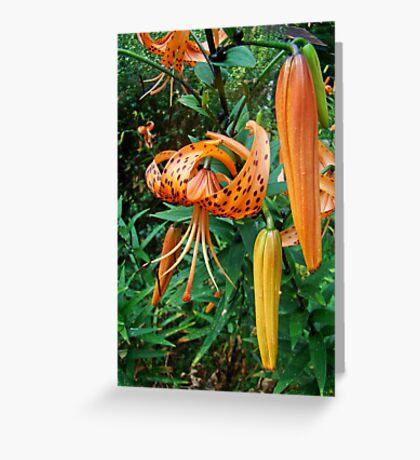 Turks Cap Lily Wildflower - Lilium superbum Greeting Card