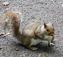 Squirrel in the Woods by DEB VINCENT