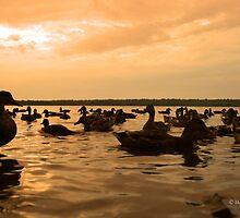 Beneath The Orange Horizon by Heather King
