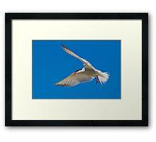 Flying V  Framed Print