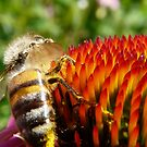honeybee and coneflower by tego53
