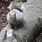 Squirrel on a log by DEB VINCENT