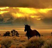 High Desert Gold by Jeanne  Nations