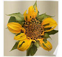 The alternative Sun Flower Poster