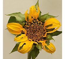 The alternative Sun Flower Photographic Print