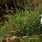 Heron at the river by Esther  Moliné