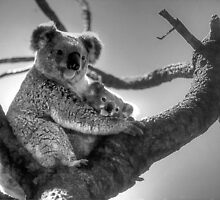Koala Mum & Baby by Eve Parry