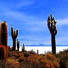 Giant Cacti - Salar Uyuni by Honor Kyne