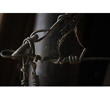 wire web Photographic Print