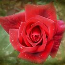 Red Rose with Textured Layer by Eve Parry