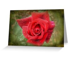 Red Rose with Textured Layer Greeting Card