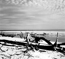 Debris on a Deserted Beach - Fraser Island by Honor Kyne