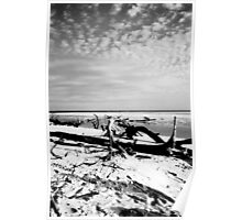 Debris on a Deserted Beach - Fraser Island Poster