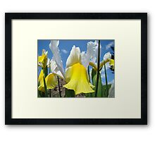 Floral Yellow White Irises Flowers art prints Baslee Troutman Framed Print