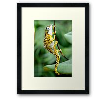 Tiger Chameleon Framed Print