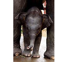 Baby Asia Elephant Photographic Print