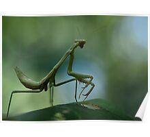 Summer Mantis Poster