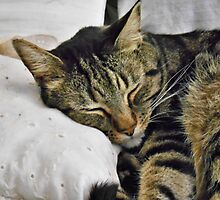 DJ Naps On His LIttle Pillow by James Brotherton