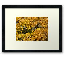 Michigan Autumn Gold Framed Print