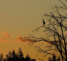 Heron After Sunset by Mully410