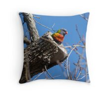Rainbow Lorikeet, Pulteney Street, Adelaide Throw Pillow