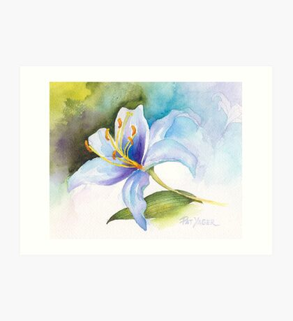 White Lily Study Art Print