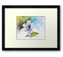 White Lily Study Framed Print