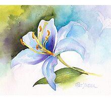 White Lily Study Photographic Print