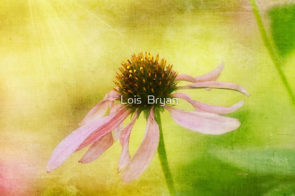 Heart's Desire by Lois  Bryan