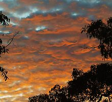 Sky Dragon by rogbar101