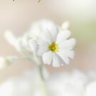 Purity © Vicki Ferrari Photography by Vicki Ferrari