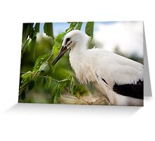 Ciconia ciconia child sitting Greeting Card