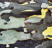 Bark Abstract by Laurie Minor