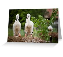 Orphaned two White Storks Greeting Card