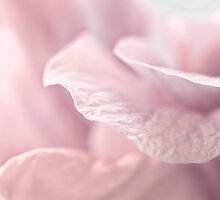 misty pink by Teresa Pople