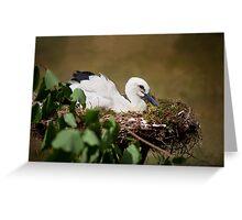 Orphaned White Stork  Greeting Card