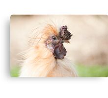 Bad Hair Day - silky rooster Canvas Print