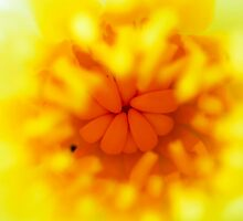 Heart of the Flower by davamo