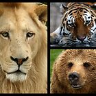 Lions, Tigers and Bears. by Mark Hughes
