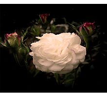 White Cloud Roses Photographic Print