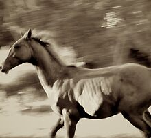 Tasting Freedom by Renee Hubbard Fine Art Photography