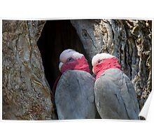 Nest Poster