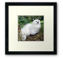 On a Tree Branch ! Framed Print