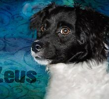 Zeus - aka a bundle of energy by Myillusions
