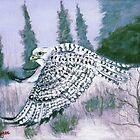 Alaskan Hawk by Dan Wagner