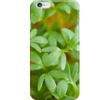 cress leaves of fresh sprouts iPhone Case/Skin