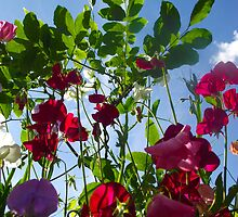 Sweet Pea Heaven by artyfifi