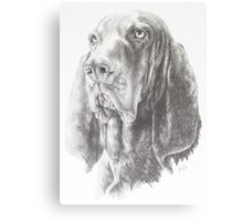 Black & Tan Coonhound Canvas Print